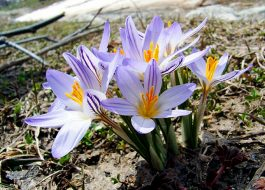 Архыз весной