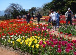 Крым-Никитский-ботанический-сад