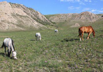 Конный тур по Байкалу для начинающих
