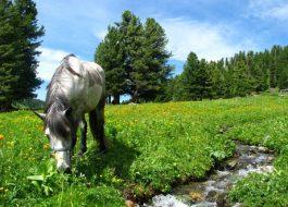 Конный тур на Алтае для начинающих
