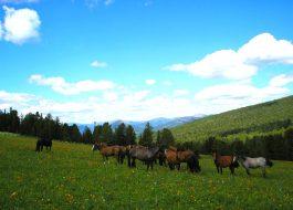 Конный тур по Алтаю