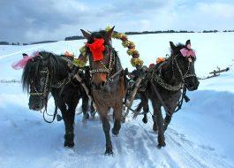 Башкирия кони сани