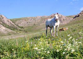 Конный тур по Байкалу