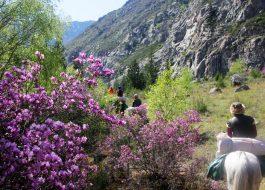 Туда, где цветет маральник4
