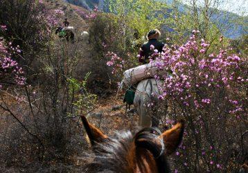 Туда, где цветет маральник2