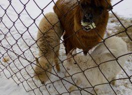 Висим: музей Д.Н. Мамина-Сибиряка, оленеводческая ферма, горя Белая, 1 день