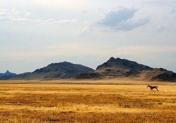 Казахстан-Степь