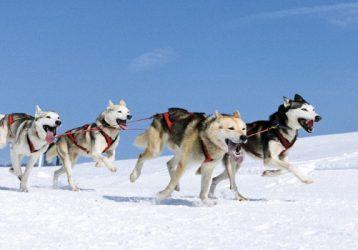 Новогодние праздники на Байкале3