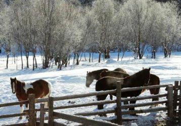 Сказка Зимней тайги2