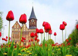 Экскурсионный тур «Весна в Калининграде» с перелётом из Екатеринбурга 4 дня / 3 ночи