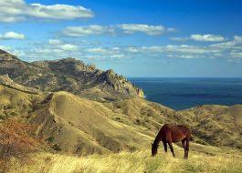 2020 Море, Крым, цветы и кони. Тур с фотосессиями