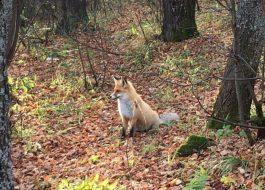 Национальный парк Таганай - Двуглавая Сопка. Активный тур выходного дня